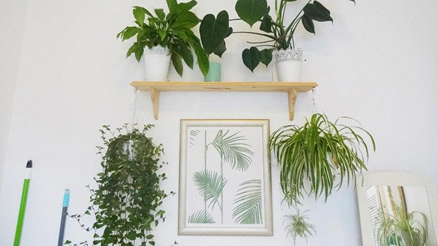 Decoraciòn con plantas