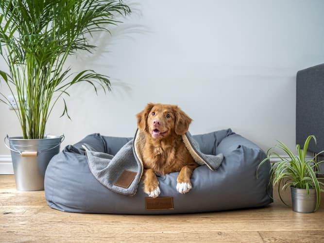 Reformas para mejorar la vida de su mascota